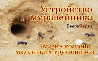 Как делают муравейник муравьи
