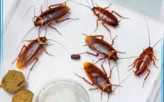 Как в кафе избавиться от тараканов