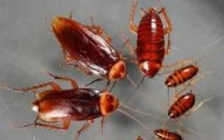 Средство от тараканов американское