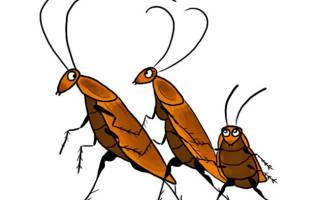 Как называют тараканов в народе