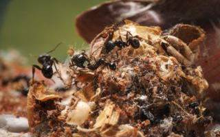 Как вывести муравьев из под фундамента дома