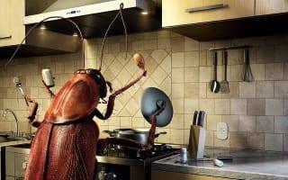 Как вытравить из квартиры тараканов