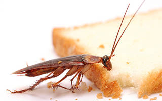 Сэс обработка от тараканов