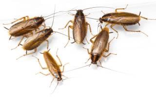 Как заводятся тараканы