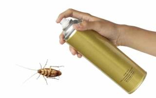 Как избавиться от рыжих тараканов в домашних условиях