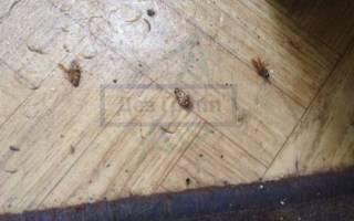Средство от тараканов и прусаков