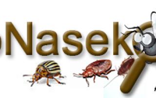 Как выглядят какашки тараканов