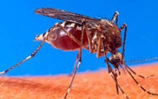 Дезинфекция в ташкенте от тараканов