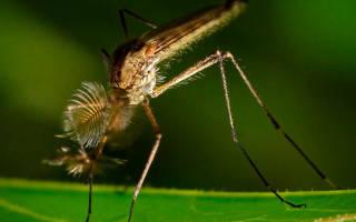 Как устранить зуд от укуса комара