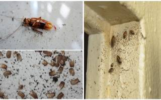 Гнездо тараканов как найти