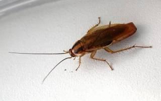 Избавиться от тараканов в череповце